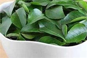curry leaf is useful for the body  learn more benefits