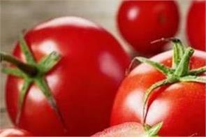 tomato is extremely beneficial for the body