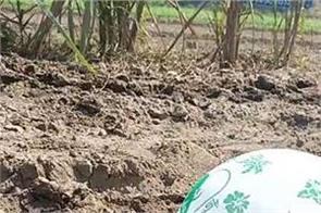 faridkot farms balloons pakistan slogans