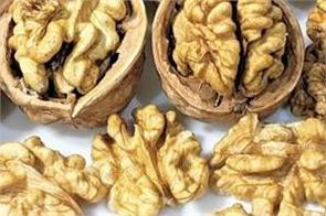 eating walnuts speeds up the brain body