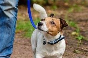 london dog walker