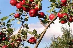 union cabinet jammu and kashmir 12 lakh tonnes apples procurement