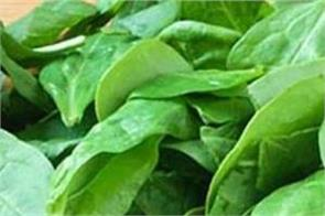 spinach eyesight bones anemia obesity