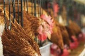 uk bird flu threat posed with corona