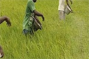 farmers will now get accident insurance of rs 1 lakh on purchase of fertilizer