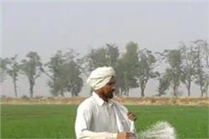 urea fertilizer  punjab  farmers  disturbed  crops