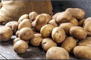 potato rates crash in haryana