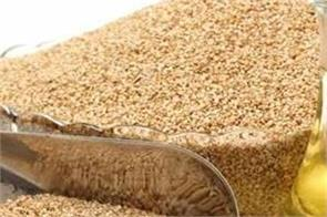 sesame oil cures many ailments of the body