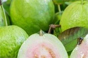 be sure to include guava in your diet as well as relieve constipation