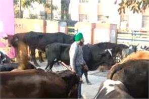 ferozepur stray animals
