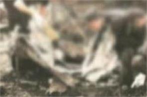 maur mandi bomb blast
