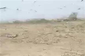 fazilka  locust gang  attack