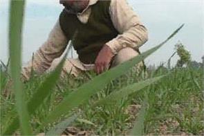 talwandi sabo  farmer rajinder singh bhola  organic farming