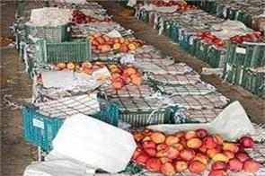 amritsar  gold smuggling  icp  afghanistan  transparent boxes  apples