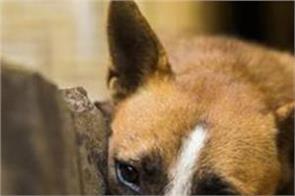 dog beaten in ludhiana