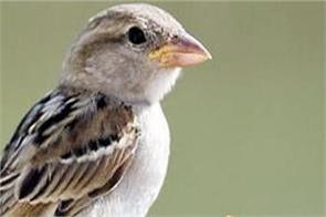 indian birds population 79 percent reduction report