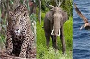 asian elephant india migratory creatures proposal