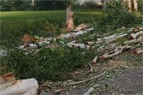 ngt reprimands haryana govt for cutting trees in bhondsi village