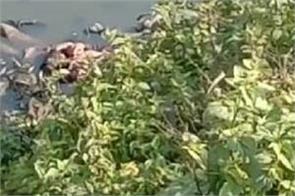 police recovered man deadbody in bist doab river