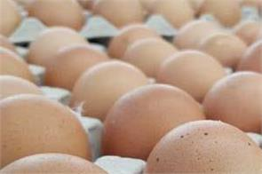 eggs and chicken prices
