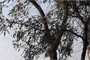 tree  car  death