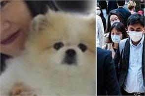 hong kong  pet dog
