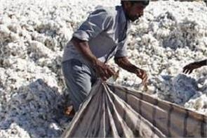 cotton  prices  hike