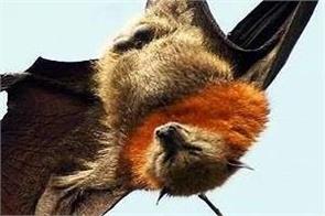 united states bats