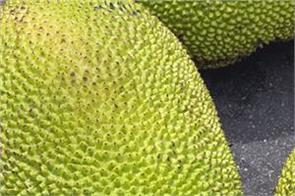 jackfruit benefits heart attack