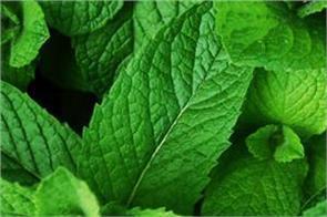 mint benefits pimples