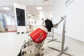 can covid dogs sniff out dangerous virus uk begins testing