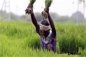 crop diversification in punjab