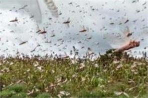 locust squad hoshiarpur
