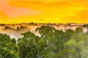 brazil amazon jungle