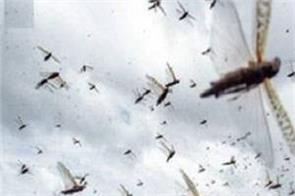 locust swarms delhi after mp and maharashtra