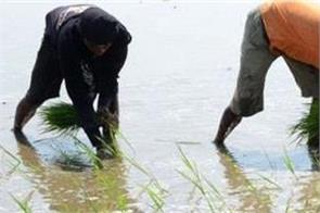 lack of labor forces farmers to think