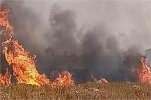 the fire near village jalal nangal reduced about 300 acres of wheat to ashes