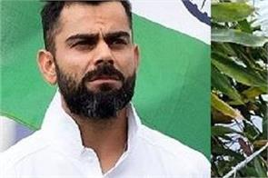 virat kohli and these all players speak out on death of pregnant elephant