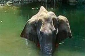 ministry of environment pregnant elephant firecrackers fruits