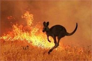 australia animals wildfires
