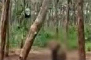 monkey cruelty video viral 6 villagers detention
