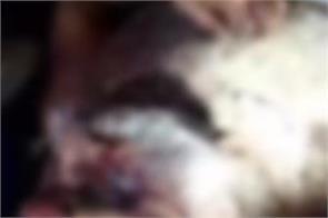 man murder case hoshiarpur