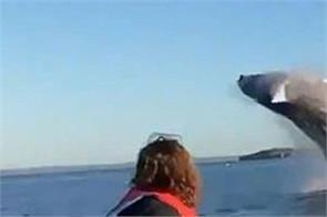 canada humpback whale jumps