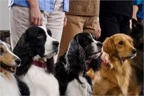 german government plan pet dog