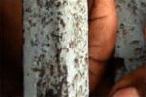 38 prisoners of limbdi sub jail in gujarat corona infected