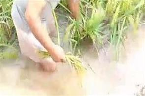 rain water drains tears from farmers   eyes