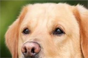 aids disease spreading in dogs