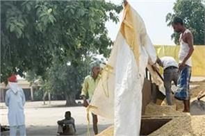 machhiwara grain market basmati farmers upset