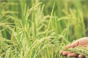 punjab chief secretary reviews preparations for paddy procurement