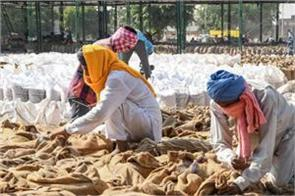 govt procures 16400 tonnes of paddy from punjab haryana